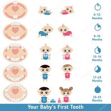 Baby Teething Chart Stock Vector Ninamunha 104241498