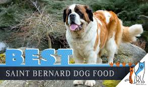 Saint Bernard Height Chart 6 Best Saint Bernard Dog Foods Plus Top Brands For Puppies