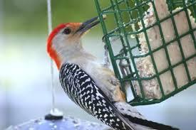 bird suet cage