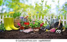 Planter, fleurs, jardin, printemps. Planter, fleurs, ensoleillé, jardin,  printemps. | CanStock
