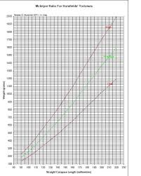 Russian Tortoise Size Chart Russian Tortoise Weight Chart