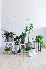 Quelle che noi definiamo piante per interni o piante da appartamento, sono in realtà il risultato di una lunga selezione, operata dall'uomo, su arbusti venivano coltivati all'interno di vasi e cassette; Marimo Consigli E Cura Unprogetto Progettazione E Arredamento Di Interni