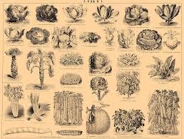 Овощи Википедия