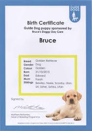 dog birth certificates bruce the guide dog puppy bruces doggy daycare