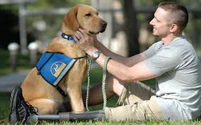 Resultado de imagen de perros ayudando