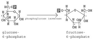 Glycolysis 10 Steps Explained Steps By Steps With Diagram