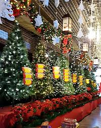 10 places to christmas trees