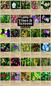 Climbers And Creepers  Plant Guide  Lifestyle HOMEWall Climbing Plants Names