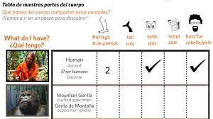 Human Body Parts Chart In English Field Trip Worksheet Body Parts Scavenger Hunt