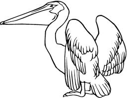 Pelikaan Strekt Zijn Vleugels Kleurplaat Gratis Kleurplaten Printen