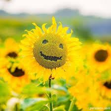 نتیجه تصویری برای انرژی مثبت