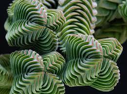 Geometric Patterns In Nature