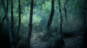 Forest Dark Nature Wallpaper Nature And Landscape