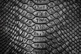 Snake Skin Pattern Delectable Black Snake Skin Pattern Texture Background Stock Photo Picture And
