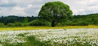 ukraine ecotourism in ukraine the best places of virgin  ecotourism in ukraine the best places of virgin nature