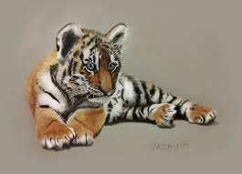 color tiger drawing. Delighful Tiger Tiger Cub  Colored Pencils Drawing By JasminaSusak  To Color U