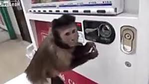 Monkey Uses Vending Machine New Monkey Buys Himself A Drink Video Dailymotion