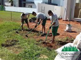 O período é apropriado para o plantio de grama e plantas ornamentais. Como Plantar Grama Em Placas 7 Passos