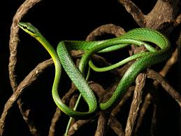 Thank you for helping keep microsoft makecode a friendly place! How The Snake Got Its Extra Long Body