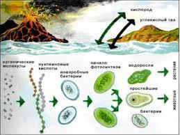Рефераты эволюция жизни на земле > решение найдено Рефераты эволюция жизни на земле