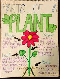 Parts Of A Plant Anchor Chart Anchor Charts Parts Of A