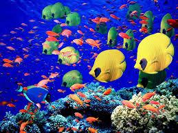 أكبر تجميع لأجمل صور من اعماق البحار (سبحان الله الخالق العظيم) Images?q=tbn:ANd9GcSaTmhwCD2to8AFlFS85REebYGIozRR3Ijkk_XFZcjlH7G-nMpltQ