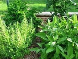 culinary herb gardens how to create