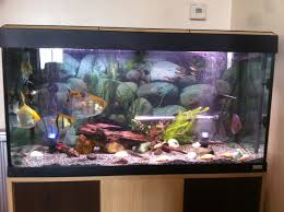 Labyrinth Fish Tank Fish Tank Exceptional Fish Tank Pets Photo Inspirations Online Get