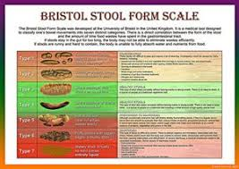 Bristol Stool Chart For Kids Bristol Stool Scale Laminated Health Chart A2 Glossy Paper