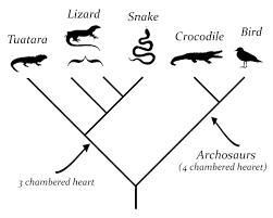 What Is A Cladogram