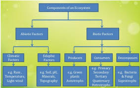 Components Of Ecosystem Flow Chart Revision Notes For Science Chapter 15 Our Environment