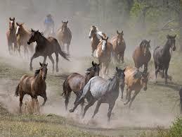 wild horses running. Unique Horses WildHorsesRunningFreeWallpaperHD02 Intended Wild Horses Running A
