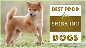 Shiba Inu Growth Chart 10 Best Healthiest Options Dog Foods For Shiba Inus In 2019