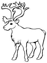 Small Picture Reindeer Caribou coloring page Free Printable Coloring Pages