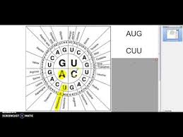 How To Use A Codon Wheel Youtube