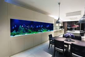 Cool Aquariums Transform The Way Your Home Looks Using A Fish Tank Discus
