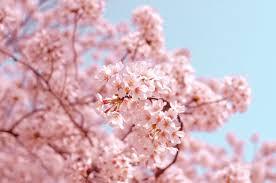 Fotobehang Bloemen Wilde Bloemen Grote Bloemen Of Zwart Wit Geprint
