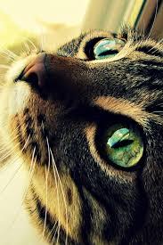 cat eyes mobile wallpaper mobiles wall