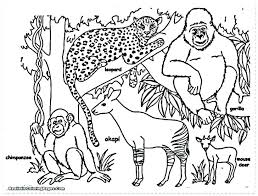 Safari Animals Coloring Sheets Page Pages Safar Mosshippohaven