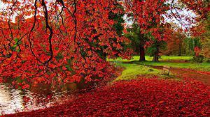 Autumn Wallpapers 1920x1080 - Wallpaper ...