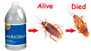 How To Get Rid Of Cockroaches Permanently Pesty Insect Solves