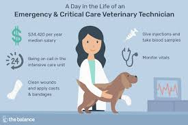 Veterinarian Technician Salary Emergency Critical Care Vet Tech Job Description Salary