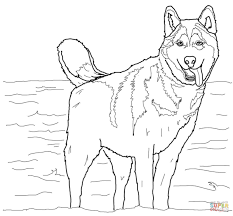 Small Picture Siberian Husky coloring page Free Printable Coloring Pages