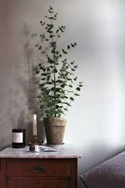Decorative Indoor Trees 1000 Ideas About Indoor Trees On Pinterest Indoor Tree Plants