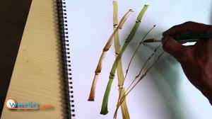 draw bamboo sticks watercolor painting step by step