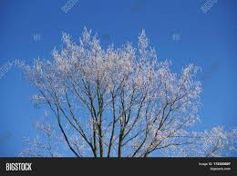 cool outdoor backgrounds. Background, Beautiful, Birch, Blue, Bough, Branch, Climate, Cold, Cool Outdoor Backgrounds 8