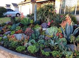 succulents rock garden rock garden succulents best landscaping suitable for images on small succulent rock gardens
