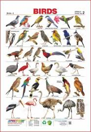 Birds Chart With Names In English Spectrum Set Of 3 Educational Wall Charts English Alphabets Domestic Animals Birds 2 Multicolor