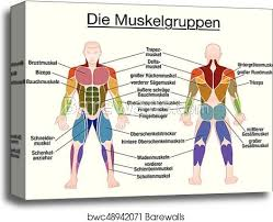 Muscle Diagram German Text Male Body Canvas Print