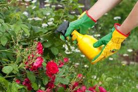 Resultado de imagen para fungicida ecologico para plantas